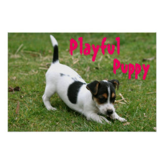 Playful Puppy Poster