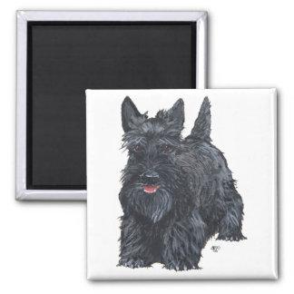 Playful Scottish Terrier 2 Inch Square Magnet