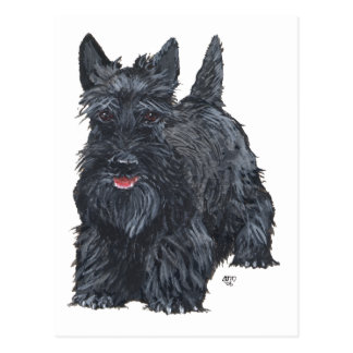 Playful Scottish Terrier Postcard