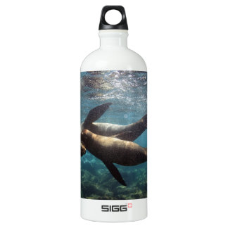 Playful sea lions Galapagos Islands Water Bottle