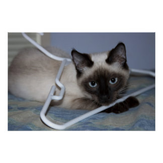 Playful Siamese Poster