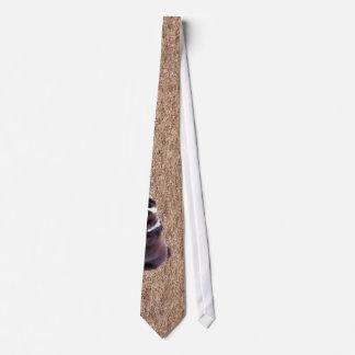 Playful Springer Spaniel Tie
