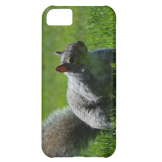 Playful Squirrel Cover For iPhone 5C