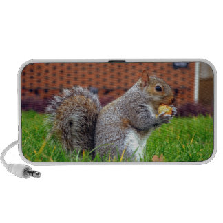 Playful Squirrel ! Mp3 Speakers
