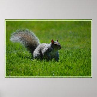 Playful Squirrel Print