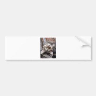 Playful Striped Feral Tabby Cat Bumper Sticker