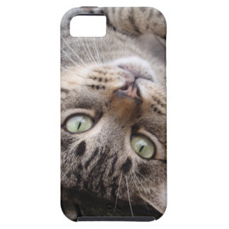 Playful Striped Feral Tabby Cat iPhone 5 Covers