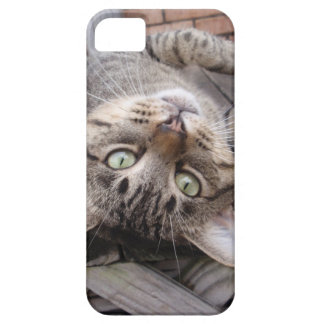 Playful Striped Feral Tabby Cat iPhone 5 Cover