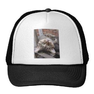 Playful Striped Feral Tabby Cat Trucker Hat