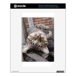 Playful Striped Feral Tabby Cat NOOK Color Skins