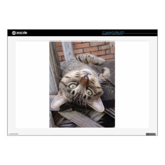 Playful Striped Feral Tabby Cat Laptop Decal