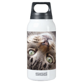 Playful Striped Feral Tabby Cat Thermos Water Bottle