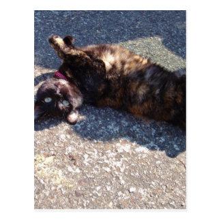 Playful Tortoiseshell Cat Postcard