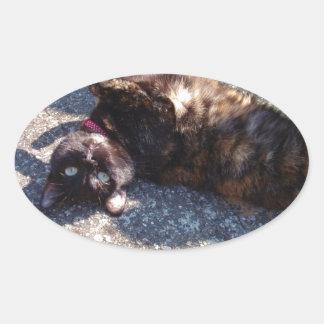 Playful Tortoiseshell Cat Sticker