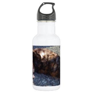 Playful Tortoiseshell Cat Water Bottle