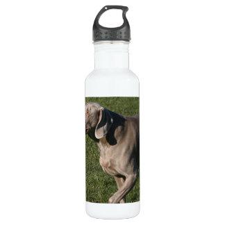 Playful Weimaraner Dog 24oz Water Bottle
