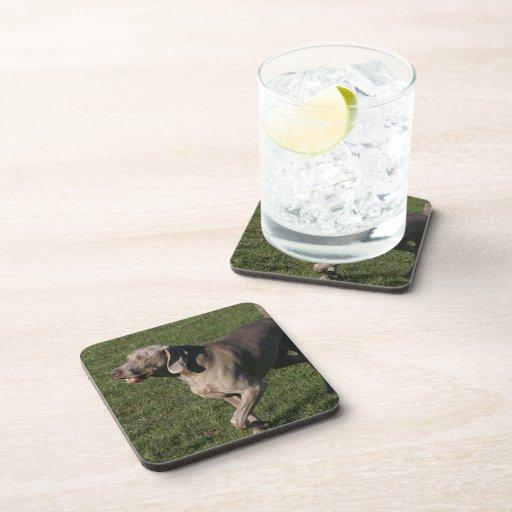 Playful Weimaraner Dog Cork Coasters
