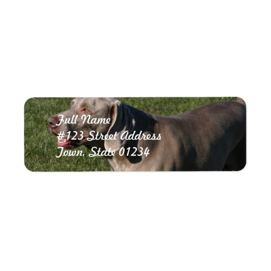 Playful Weimaraner Dog Mailing Label