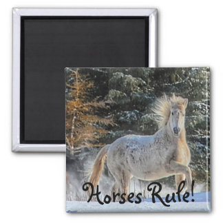 Playful White Horse in Winter Snows Photo Magnets