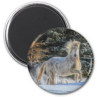 Playful White Horse in Winter Snows Photo Fridge Magnets
