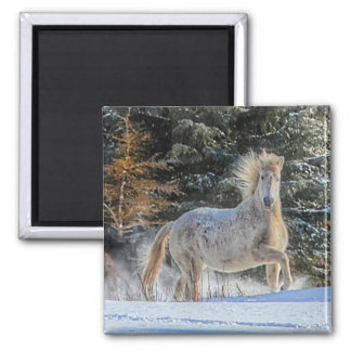 Playful White Horse in Winter Snows Photo Refrigerator Magnets