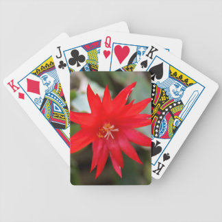 Playing Cards - Easter Cactus