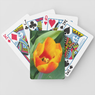 Playing Cards Picturing Orange and Red Tulip