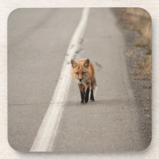 Playing Chicken with a Fox Beverage Coaster