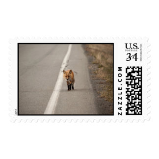 Playing Chicken with a Fox Postage