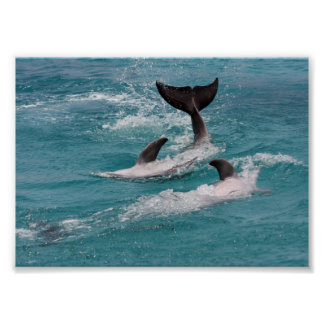 playing dolphins print