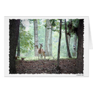 Playing in the Woods Greeting Card
