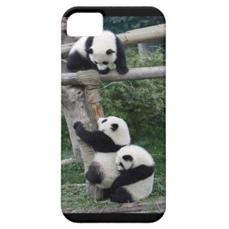 Playing Pandas iPhone5/5s Case iPhone 5 Cases