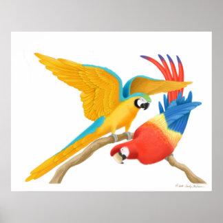 Playing Pet Macaws Poster