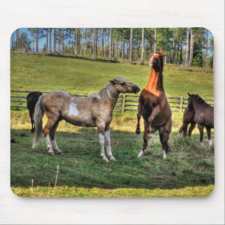 Playing Pinto Stallion & Sorrel Mare Equine Photo Mouse Pad