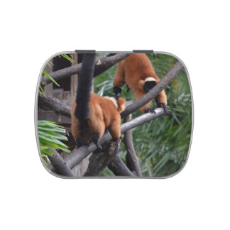 Playing Primates Red Bellied Lemurs Jelly Belly Candy Tin