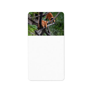 Playing Primates Red Bellied Lemurs Personalized Address Labels