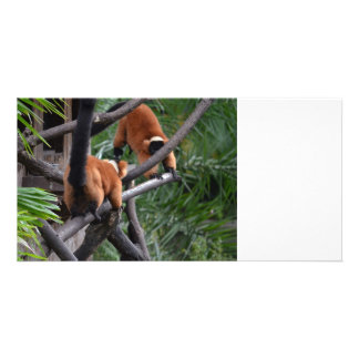 Playing Primates Red Bellied Lemurs Photo Card