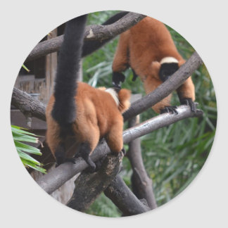 Playing Primates Red Bellied Lemurs Round Sticker