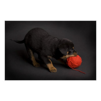 Playing Puppy 1 Poster
