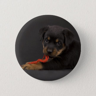 Playing Puppy 5 Pinback Button
