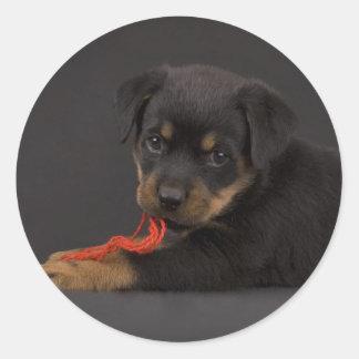 Playing Puppy 5 Classic Round Sticker
