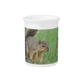 Playing Squirrels Drink Pitchers