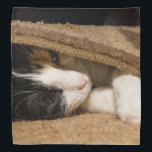 """Playing Under The Rug Bandana<br><div class=""""desc"""">Macy, a young, full blooded Calico cat has climbed under a rug thinking she is hiding, to play. Looking for more prints or products? Feel free to visit my store: http://www.zazzle.com/timelessmomentsphtgy This photo was taken by Jennifer White with Timeless Moments Photography. All images are copyrighted &#169; Timeless Moments Photography/Jennifer White....</div>"""