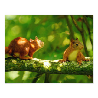 playing young squirrels card