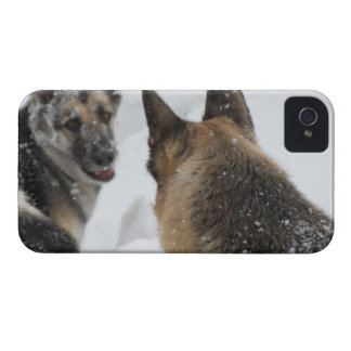 Playmates in the Snow iPhone 4 Cover