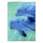 Playtime Dolphins Blank Card