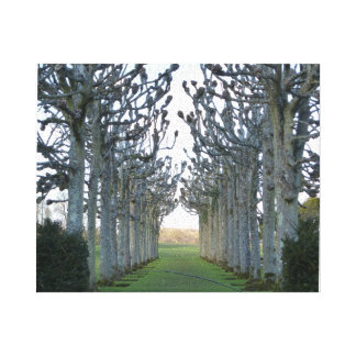 Pleached lime walk at Mottisfont Abbey Canvas Print