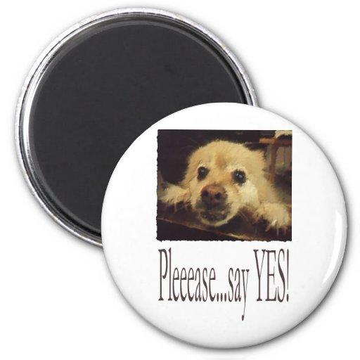 Pleading Dog Fridge Magnets