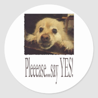 Pleading Dog Classic Round Sticker