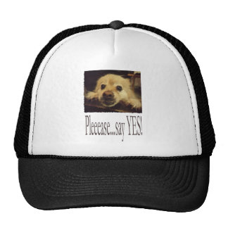 Pleading Dog Trucker Hat